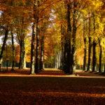 Park of Laeken